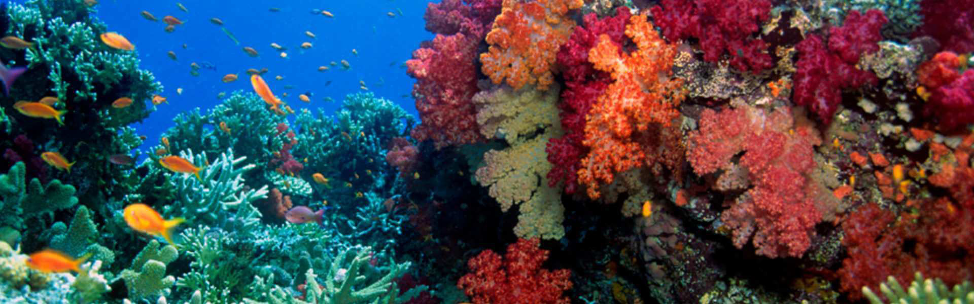 Fiji Travel Packages