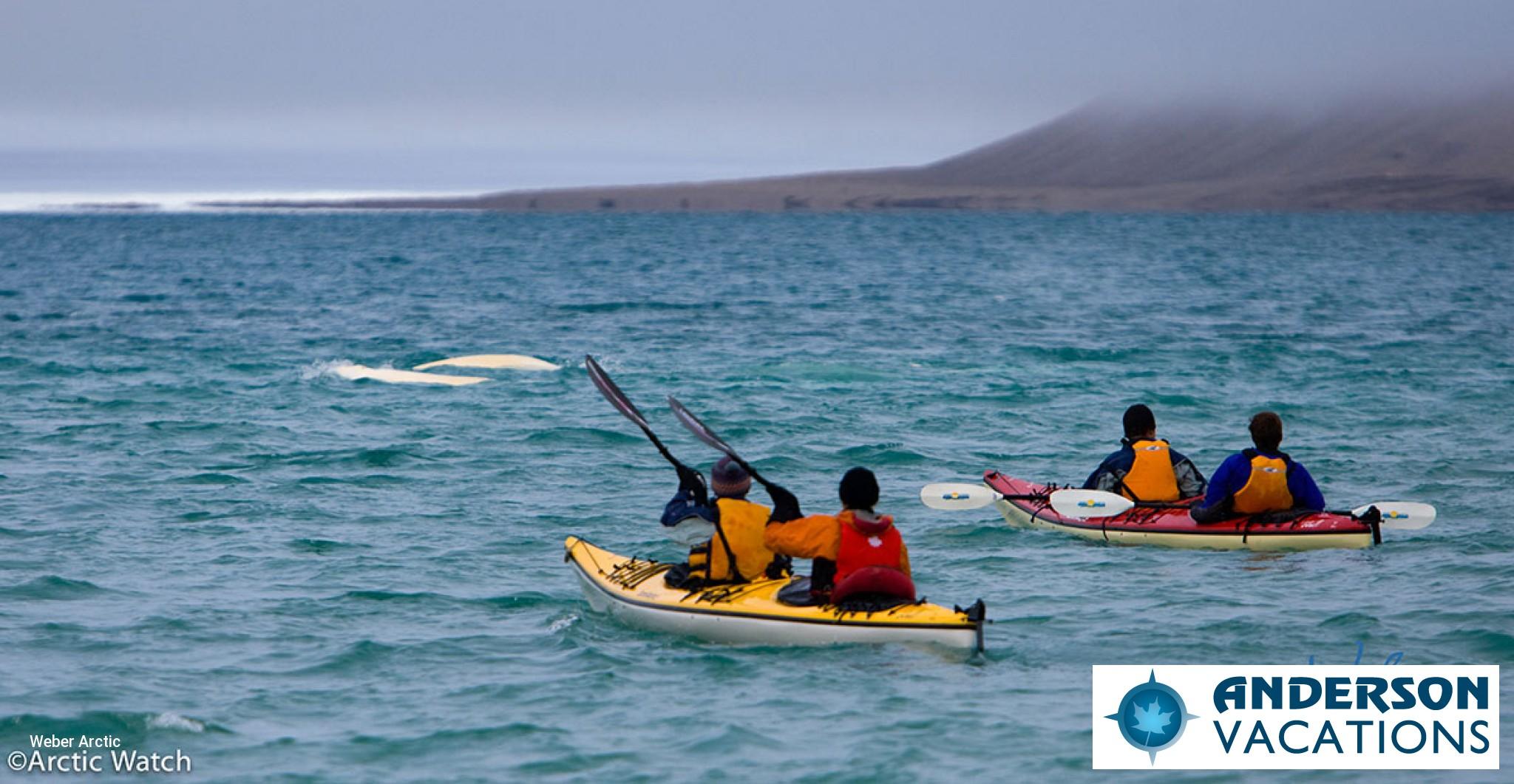 Sea Kayaking North West Passage with Belugas