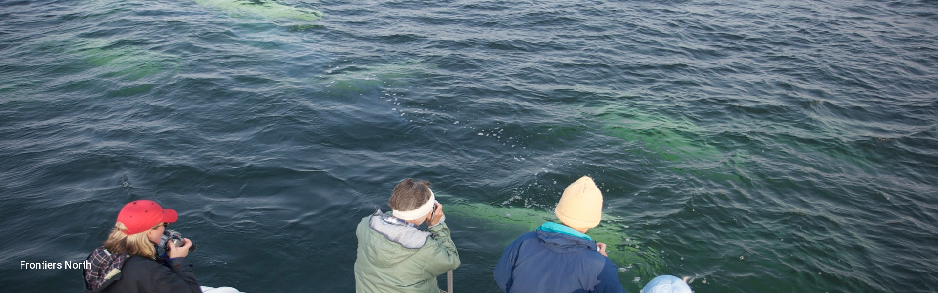 Churchill Beluga Whale Tour