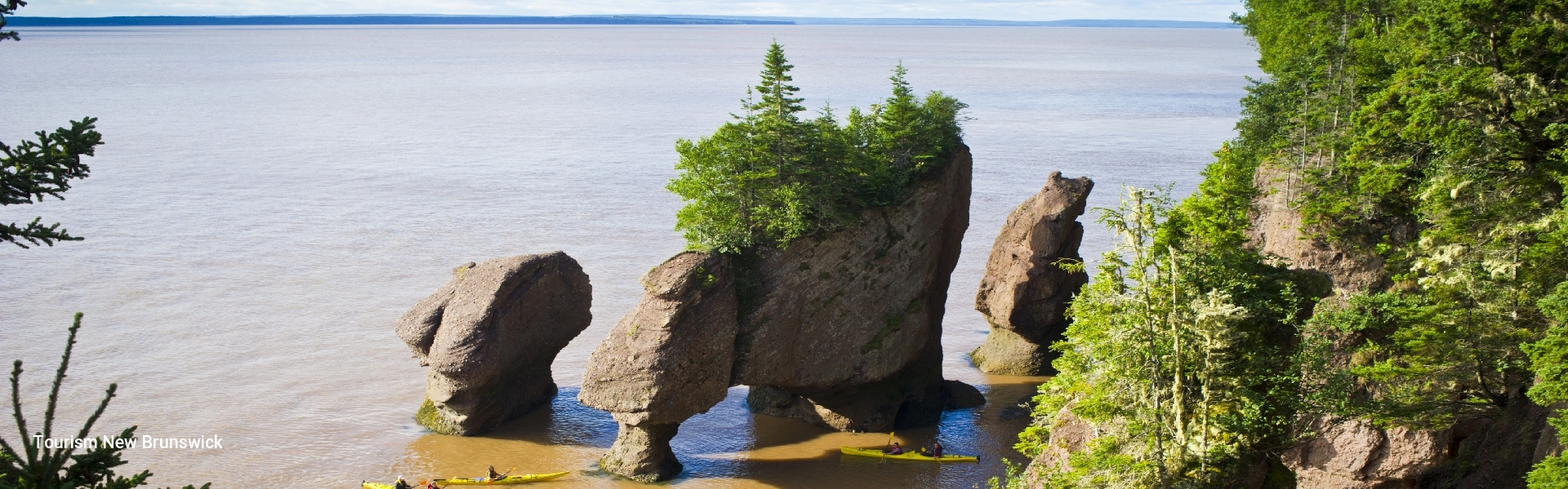 Bay Of Fundy Tour