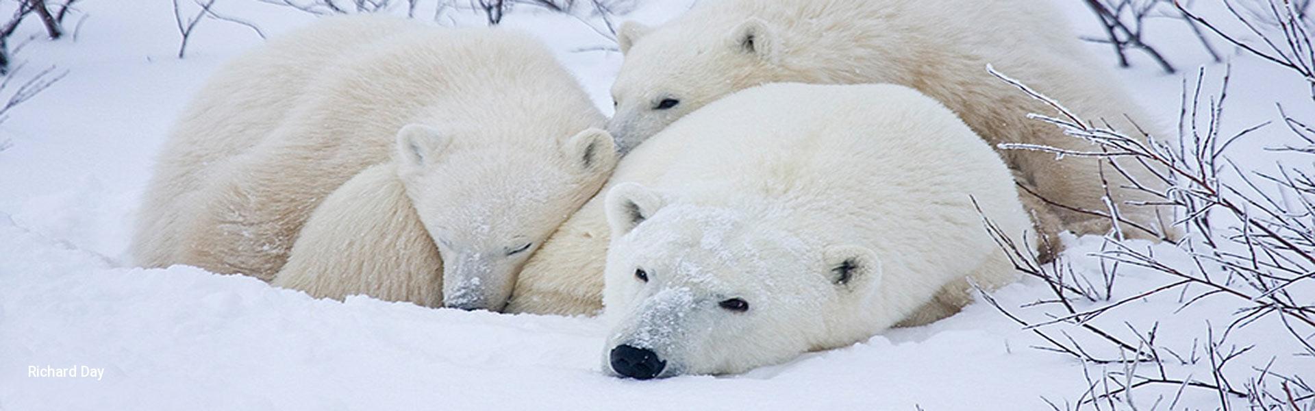 Arctic Safari